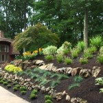 Plants to stop soil erosion