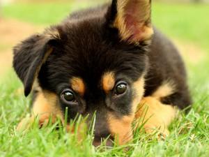 CutePuppy
